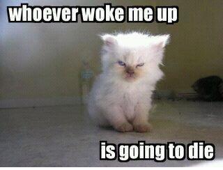 Yep. Always: Cat, Alarm Clocks, Mornings Personalized, The Weekend, Funny, Kittens, True Stories, Saturday Mornings, Animal