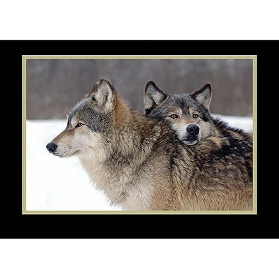 Wildlife Holiday (or anytime) Cards.Cani Lupus, Spirit Animal, Friends, Nature, Wolf, Wolves, Things, Beautiful Creatures, Beautiful Animals3