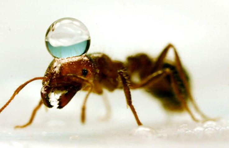A floating fire ant raft is almost unsinkable. Almost.