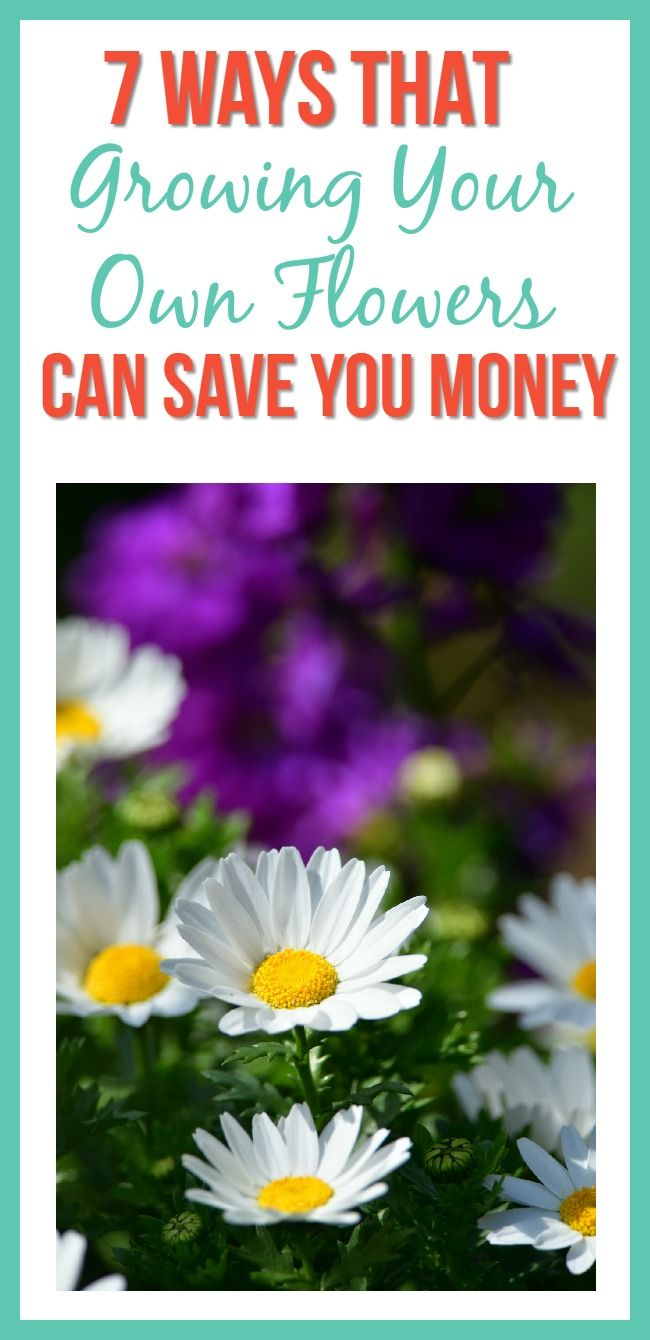 Not only are flowers pretty in the spring and summer months, but growing your own flowers saves you money in many different ways!