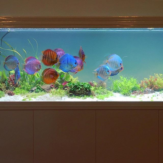 4878 best beautiful fish and aquascape images on pinterest for Aquarium aquatlantis