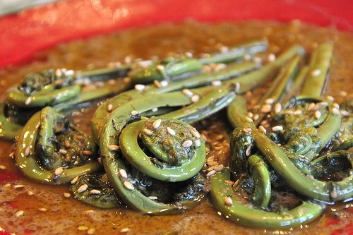 Gulai Pakis - Fiddlehead Ferns in Spicy Coconut Sauce (can't wait for spring ferns)