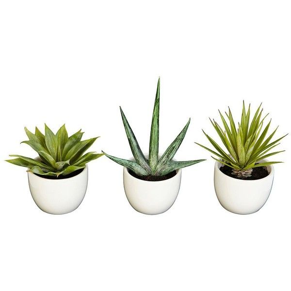 Southwest Mixed Succulent Faux Plants in Pots Set of 3 featuring polyvore home home decor floral decor plants fillers & - fillers - plant deco home accessories watering pot green home decor southwest home decor southwestern home decor fake plants