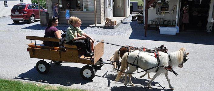 best 25 miniature horse barn ideas on pinterest mini horse barn small barns and miniature. Black Bedroom Furniture Sets. Home Design Ideas