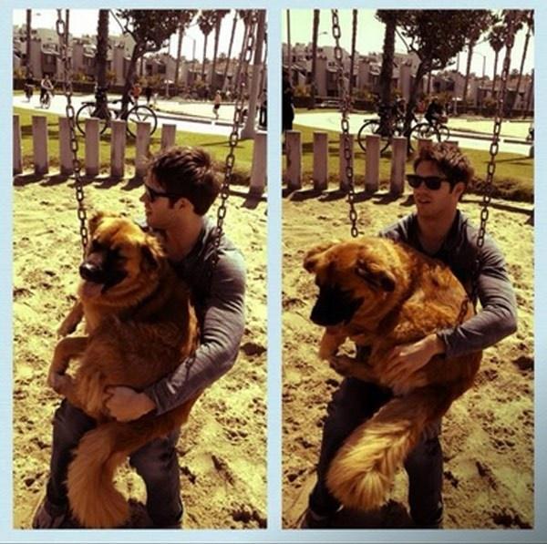 Cutest Celebrity Dogs: Vote Steven R. McQueen's Dog Max http://sulia.com/channel/vampire-diaries/f/9ebbd2a8-12f0-4a81-a4c7-8de6c84593df/?pinner=54575851