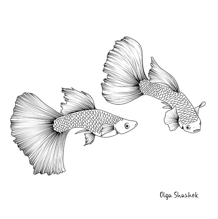 Image Of Aquarium Fish In Black And White Graphics Tattoo Of Graceful Guppies With Beautiful Fins In 2020 Koi Fish Drawing Fish Drawings Koi Fish Drawing Tattoo
