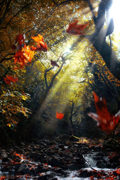 """"""" Leaves on air… by Makis Bitos """""""