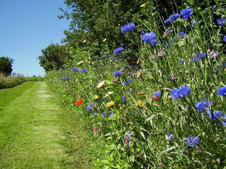 Wilde bloemen pad