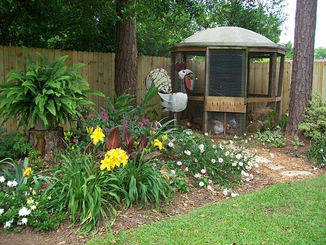 1000 images about chicken coop on pinterest cute for Old farm chicken coops