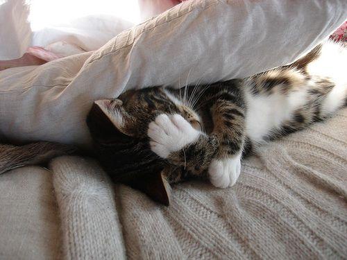 sleepLights, Animal Pics, Kitty Cat, Funny Pics, Mondays Mornings, Cat Naps, Kittens, Sleep, Kittycat