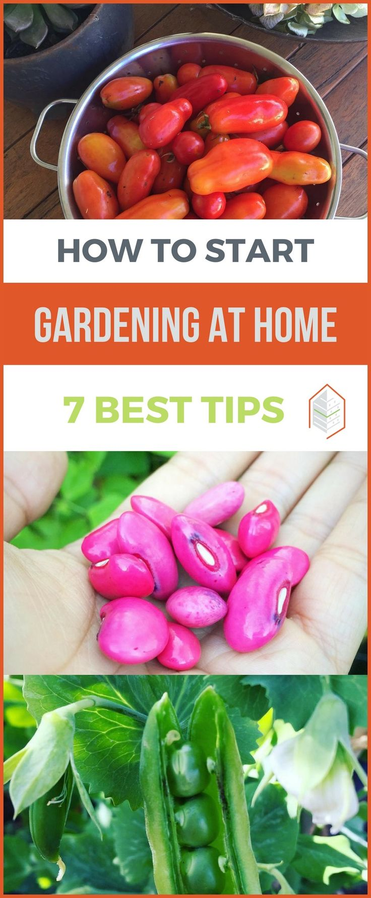 How To Start Gardening At Home: 7 Best Tips