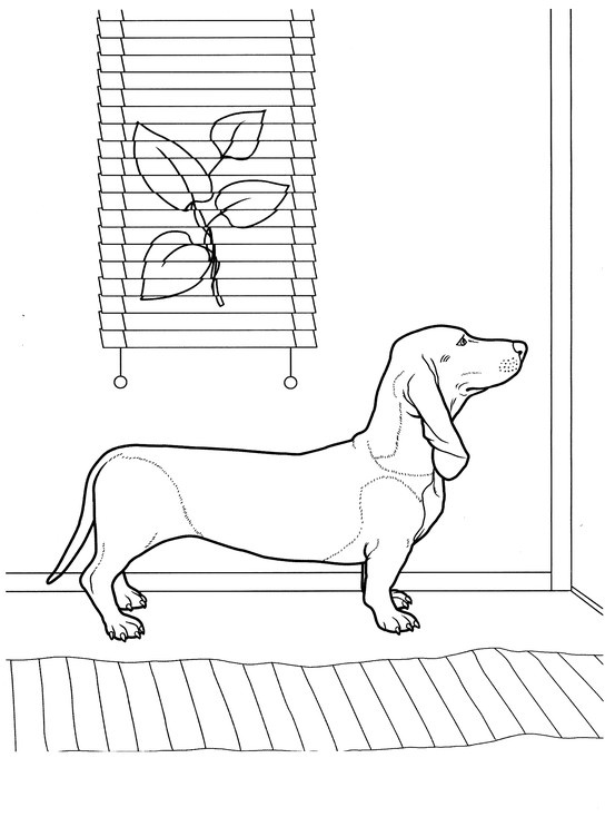 dachshund puppies coloring pages - photo#44