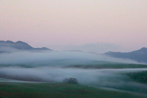 Caledon mist - Annalize Mouton Photography