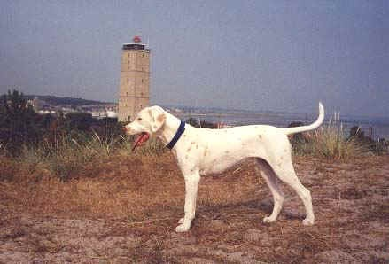 dalmatian with lemon colored spots | Dog Breeds with Odd ...