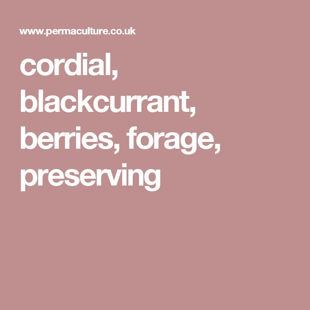 cordial, blackcurrant, berries, forage, preserving
