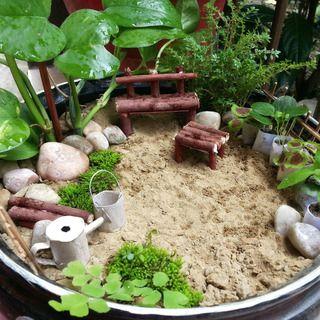Miniature Garden (For Beginners!)