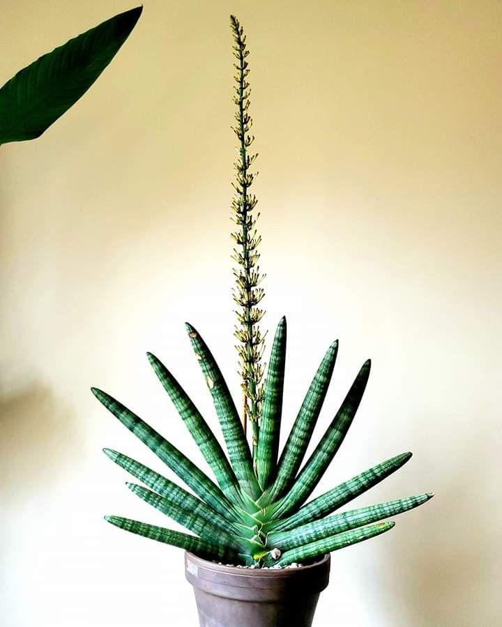 Epingle Par Hajal Lily Sur Succulents Group Board En 2020