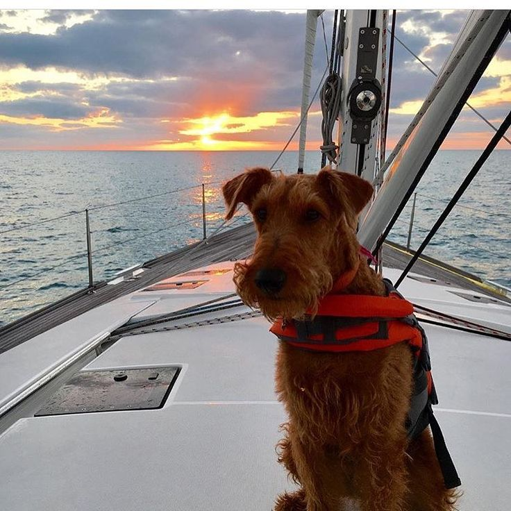 Looking back on a great Thanksgiving break @rubymangolassy  Tag your best boat buddy . . . . #mustlovedogs #instadog #dogoftheday #lakelife  #adventurewithdogs #hikingwithdogs #campingwithdogs #waterpaws #waterski #lakebum #mansbestfriend #ilovemydog #kayakdog #kayak #onthewater #sailboat #sailing #imonaboat #boats #lakedog #beachdog #onthewater #boatdog #pontoon #canoe #fishing #mustlovedogs #adventure #ifmlmydog