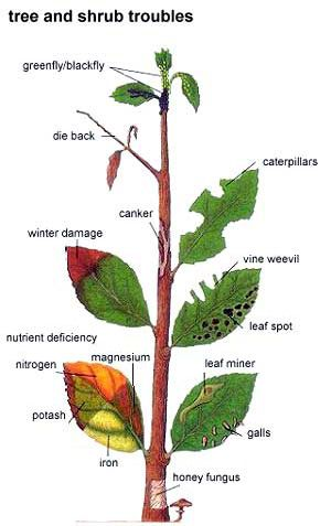 Site lists common problems and solutions for trees and shrubs, flowers & roses