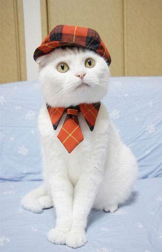 gato roupa 07