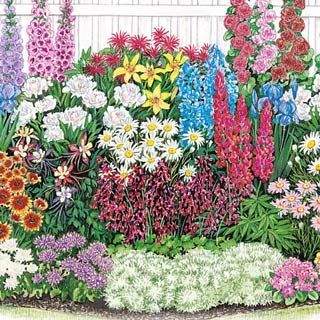 ENDLESS BLOOM PERENNIAL GARDEN;  Even experienced gardeners can find it challenging to design a perennial garden where something is in bloom  during every season. But our Endless Bloom Perennial Garden makes it easy. We've carefully coordinated  the blooming times so you'll have nonstop flowers from spring through fall. Spring brings pretty primroses, followed all summer by a host of  colorful favorites, and ending with cushion mums in fall. This 15' x 8'  garden includes 30 plants