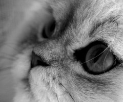 grayKitty'S Cat, Kitty Cat, Beautiful Cats, Cat Meow, Beautiful Cat Close Up, Kittens, Cat Black, Beautiful Catcloseup, Adorable Animal