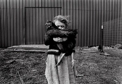 true loveAnimal Right, Little Girls, Pictures Prompts, Kevin German, Favorite Chicken, Children, 10 Minute, Farms Life, Photography