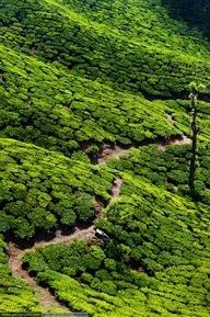purses bags Tea Plantations Kerala India  India