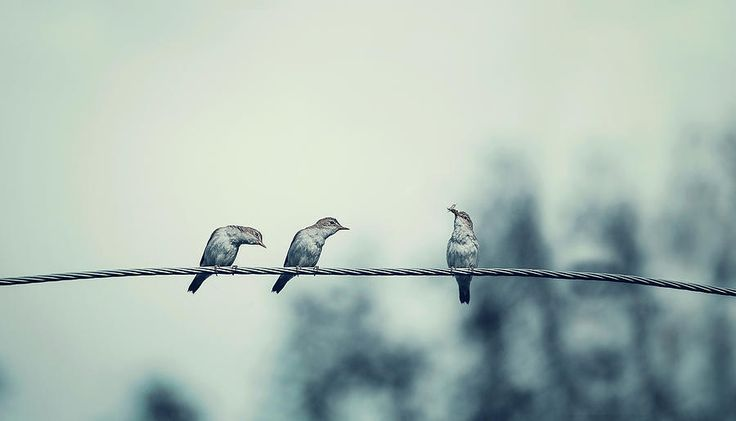 Birds On Wire Photograph by Oksana Ariskina Two birds on wire watch to another bird has a food, Grunge retro style Available as poster, greeting card, phone case, throw pillow, framed fine art print, metal, acrylic or canvas print with my fine art photography online: www.oksana-ariskina.pixels.com #OksanaAriskina