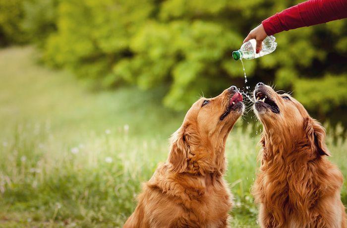 Cuida a tu animal de compañía del golpe de calor