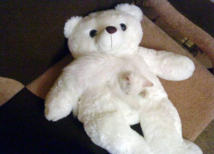 Dov'è finito il #gatto? 24 #animali domestici che si mimetizzano perfettamente