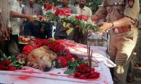 Η κηδεία του Zanjeer του σκύλου που έσωσε χιλιάδες ζωές κατά τη διάρκεια των εκρήξεων στη Βομβάη τον Μάρτιο του 1993. Ο Zanjeer κατάφερε να εντοπίσει πάνω από 3.329 κιλά εκρηκτικής ύλης RDX , 600 πυροκροτητές , 249 χειροβομβίδες και 6406 πυρομαχικά. Κηδεύτηκε με τιμές το 2000.