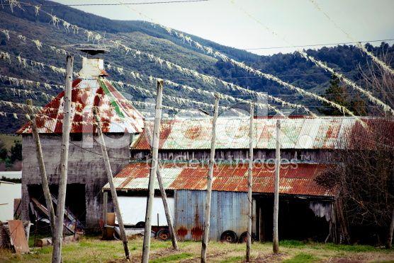 Hops Farm, new Zealand royalty-free stock photo
