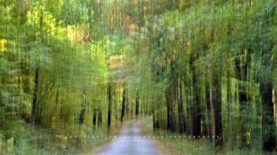 Pölcz Klaudia - kisklau: Októberi séta a Soproni Hegységben