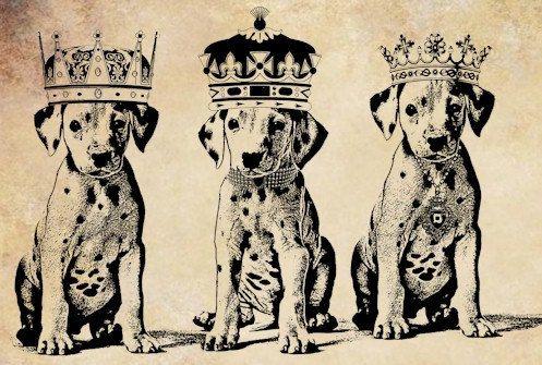 25 Best Ideas About Dalmatian Puppies On Pinterest