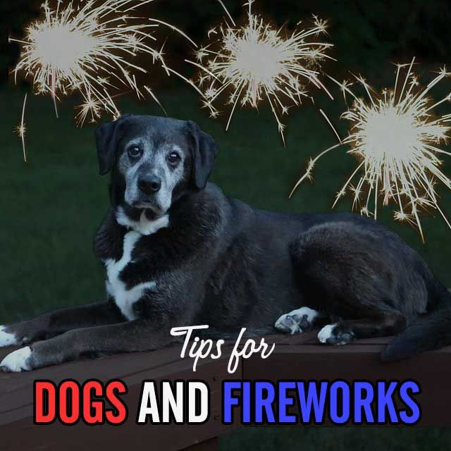 Does your dog hate the sound of fireworks or thunderstorms? We've got tips! #dogs #FourthOfJuly #fireworks