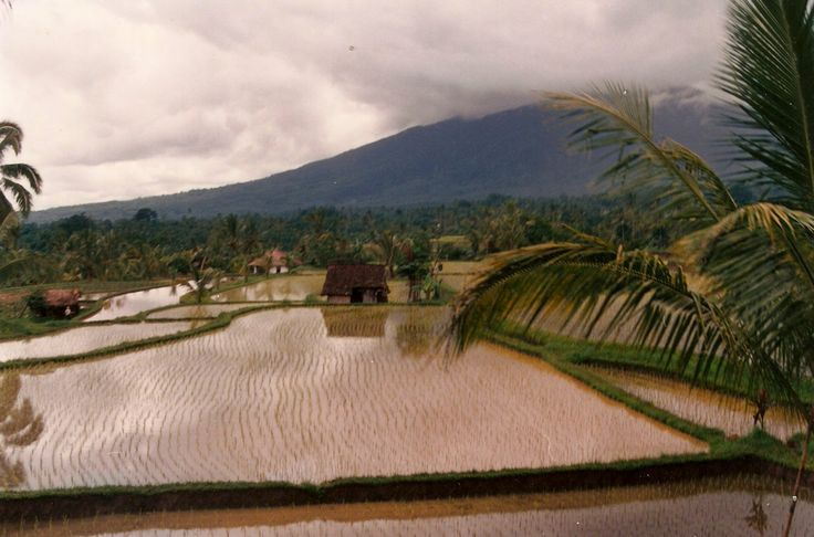 What Can You Do in Bali, Indonesia for $190,187 Rupiah? - http://www.naturalremediesblog.net/?p=6634 - #bali #indonesia #travel