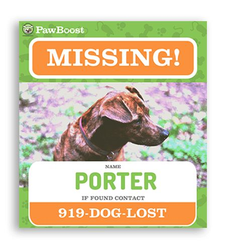 10 best lost dog template images on Pinterest Create flyers, Dog