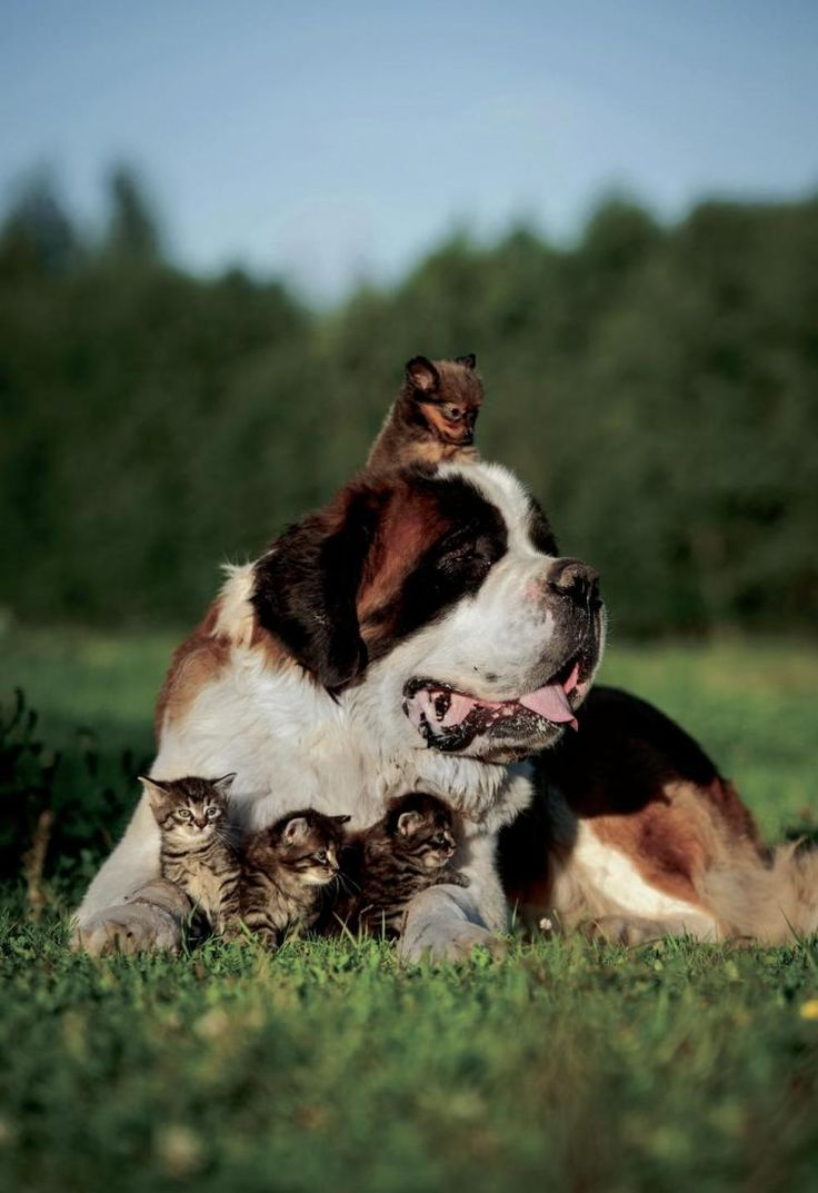 Best Ten Dogs That Get Along With Cats