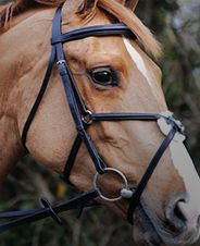 One of John Whitakers stunning English Bridles - click here for more info - http://justriding.com/en/shop/brands/whitaker.html