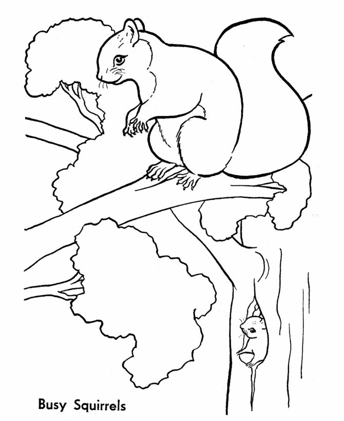 Wild Animal Coloring Page Free Printable Tree Squirrels Sheets