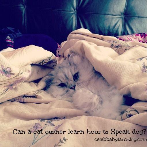 can-a-cat-owner-speak-dog-book