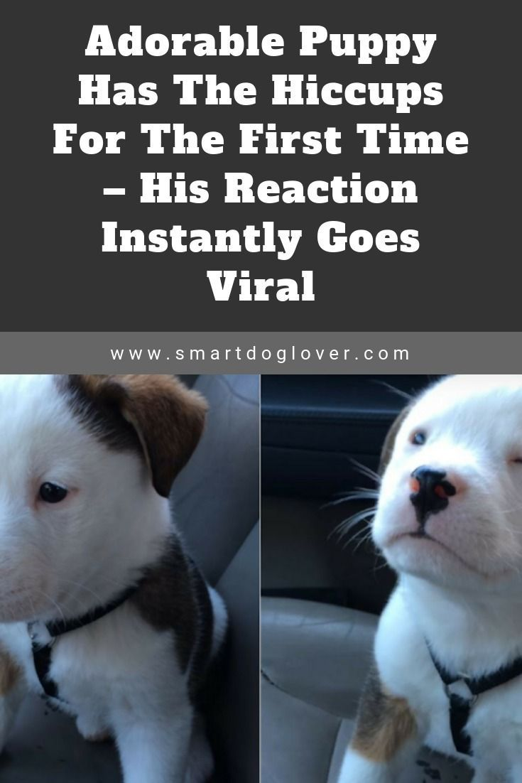 Adorable Puppy Has The Hiccups For The First Time His Reaction