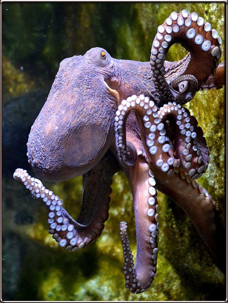 как морские осьминоги картинки с названиями ростовской области