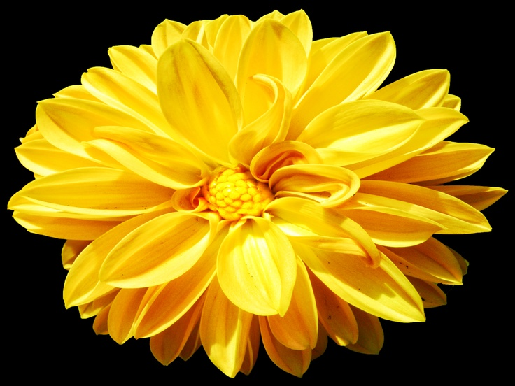 Yellow Flowers Mean Friendship Joy And Hiness