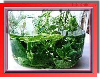 Šalvějový likér
