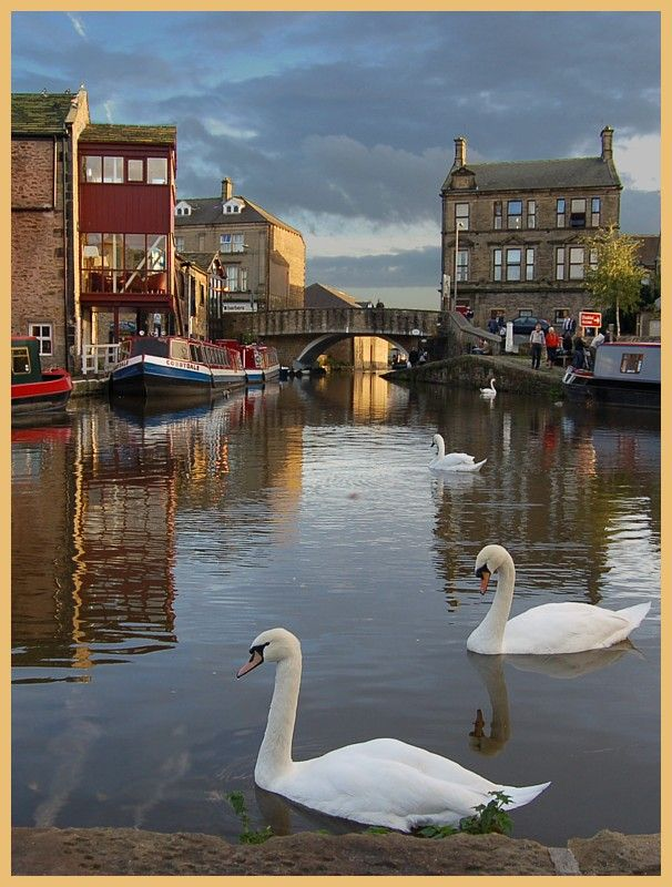 Swans on Skipton Canal - Skipton, North Yorkshire, England