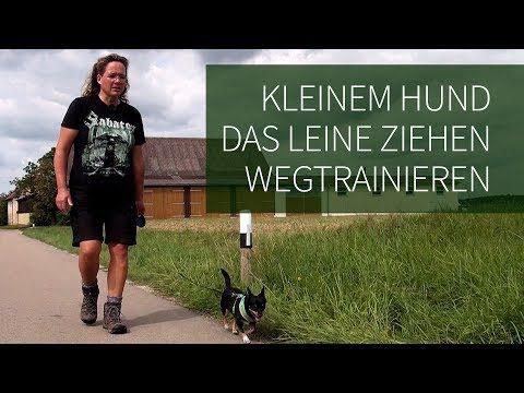 Leinenführigkeit ► Hilfe... mein Hund zieht an der Leine ! Leinenführigkeit trainieren - YouTube