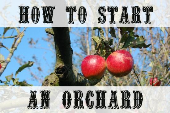 How To Start An Orchard – MomPrepares