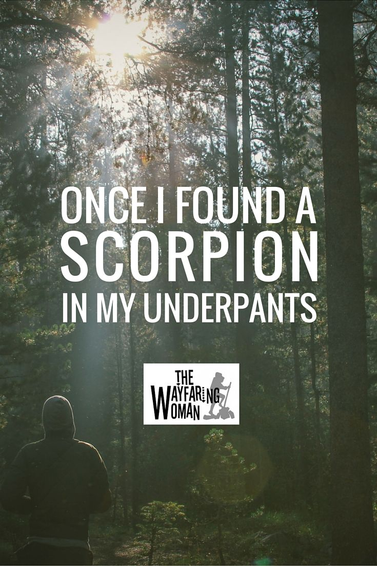 Once I Found a Scorpion in my Underpants (a travel story by The Wayfaring Woman) #travel #humor #bugs